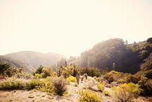 Big Sur / by Jenny Singh