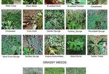 Weeds/WildHerbs