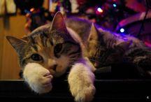 #tesorinipelosi / Tesorini pelosi: i miei adorati gatti, cani e amichetti vari