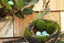Bird Nest / by Loree Horony