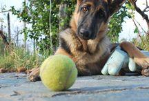 """Dogs / """"Provate a guardare negli occhi il vostro cane e ad affermare che non ha un'Anima"""" (Victor Hugo)"""