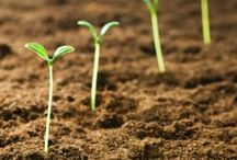 """All About: Gardening / by Adelle """"Isay"""" Q-Lauifi"""