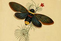 Ilustración de insectos