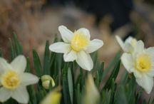 Spring / Everything Spring.  Flowers, birds, crafts, decorating ideas.