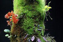 Flora / by Ian-Dawn Carpio