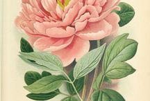 Fleurs et feuilles - drawings