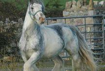 horse lovely animals