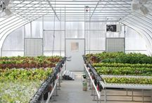 Hydroponic Greenhouse Systems / Hydroponic greenhouse systems are increasing in popularity among commercial and hobby growers, and with good reason. With the right setup, a hydroponic growing system is a cost-effective method to grow high-quality produce with maximum yields.