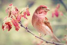 Free The Birds / by Novira Camelia