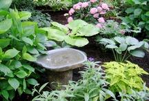 gardening / by JUDE MILLER