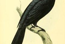 Biologické ilustrace