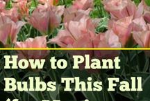 Bulbs / Bulb gardening is confusing to many, so learn the best tips here.