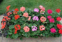 Hnojivo pro kvetiny
