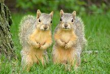 oravat