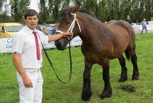 L'Auxois / Le cheval de trait Auxois porte le nom de sa région, située au cœur de la Bourgogne. Ce pays très agricole, jalonné de collines et de plaines, et doté d'un climat continental, a donné à ces chevaux leurs qualités de résistance et d'adaptation à de fortes variations de températures.
