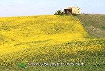 Val d'Orcia / The beautiful Val d'Orcia area in southern Tuscany represents some of the most enchanting and well-known views of Tuscany across the world.