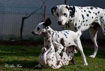 Canem - Mensch & Hund im Mittelpunkt / Hundetraining bei Canem - Angebot und vieles mehr