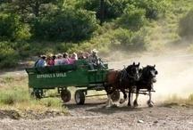 Horse Drawn Wagon Rides & BBQ's