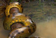 Șerpi