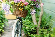 Bike Tarja Verde
