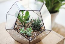 Secret Garden / by Viviana Werner