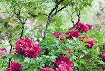 Garden / ideetjes verzamelen om de tuin mooi te maken.