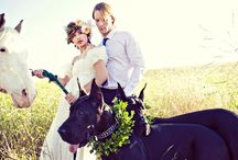 Wedding Bell Bliss <3 / It's officially time to start this board =)  / by Shannon Russ