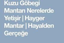 DOĞAL MANTARLAR / Türkiye'de Yetişen  Mantar Türleri