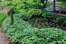 Landscape/Gardening