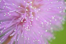 Flowers (Heavenly) / by Jessica Cashion Palmer