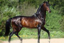 Hestefarver