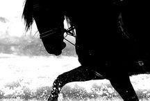 Horses / by Little Goodall