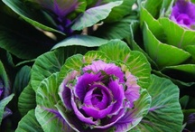purple garden / Purple plants that are amazing to look at!