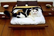 Kitty, Cat, Kitten / by Starlet {Meridian110}