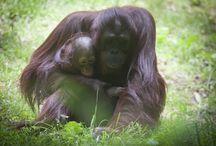 Zoo Atlanta / Zoo Atlanta