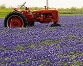 God Bless Texas / by Toni Fletcher
