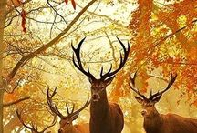 Stags with attitude