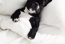 French Bulldog Love / for French Bulldog lover. Cutest creature on the planet. French bulldog arts and designs.