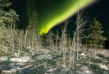 Northern lights / Beautiful auora borealis in Lapland