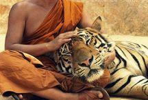 Buddhism, Tibet, India