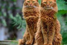 Kitty cats I love  / by Jacqueline Bercier