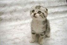 Extremely Cute Animals / by Anne Smith