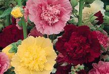 Flower Garden / by Wendy Doerksen