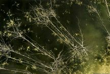 [Sublime Brain cells] / by Ne Ry