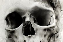 """Skull & Skeleton & Bones / The skull is a bony structure in the head of most vertebrates (in particular, craniates) that supports the structures of the face and forms a protective cavity for the brain.   ----The skeleton (from Greek σκελετός, skeletos """"dried up""""[1]) is the body part that forms the supporting structure of an organism. There are two different skeletal types: the exoskeleton, which is the stable outer shell of an organism, and the endoskeleton, which forms the support structure inside the body."""