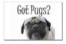 I am obsessed with PUGS!!!! / by Sue Lee