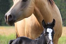 Horses / by Barb Markee Boettcher