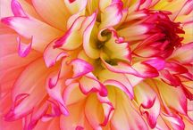 Flowers and more flowers / by Lori M