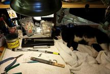 Studio Cats / Cats who hang out in the studio