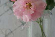FLOWER / by Chikako Maeda